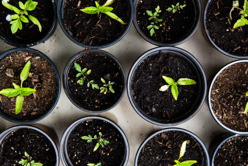 mito ou verdade: borra de café é benéfica para plantas?
